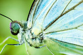 Close up blue butterfly — Stock Photo
