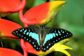 Butterfly resting on plant — Stock Photo