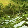 Terrace rice fields — Stock Photo #2829262