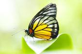 Motýl — Stock fotografie