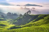 Tea Plantations — Stock Photo