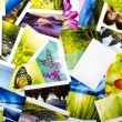 Photo collection — Stock Photo