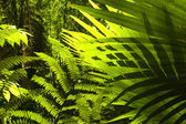 Tropical forest. — Stock Photo