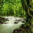 Tropical rainforest and river — Stockfoto