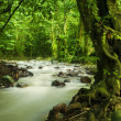 Tropical rainforest and river — 图库照片