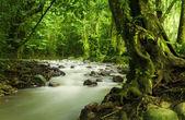 Tropikal yağmur ormanları ve nehir — Stok fotoğraf