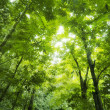 Forest sunlight — Stock Photo #3762310