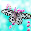 Rice Paper Butterfly — Stock Photo #3762339