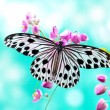 Stock Photo: Rice Paper Butterfly