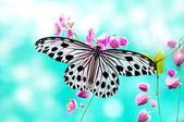 Papillon de papier de riz — Photo