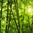 Bamboo forest. — Stock Photo #3791611