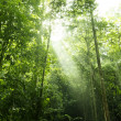 Forest sunlight — Stock Photo #3920484