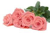 三种玫瑰的谎言 — 图库照片