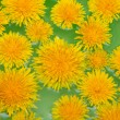 Yellow dandelions sail on green water — Stock Photo #3394319