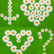Daisywheels on green background — Stock Photo