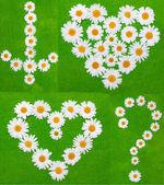 Daisywheels on green background — Stock Photo