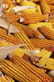 Dry corncob pile on a farm — Stock Photo