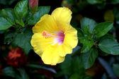 Flowers — Fotografia Stock