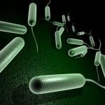 Coli bacteria — Stock Photo