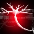 NEURON ON Digital background - Stock Photo