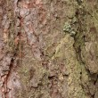 Tree bark close up with details - Foto Stock