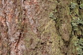 Tree bark close up with details — Stock Photo