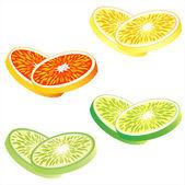 Fette di agrumi: arancia, pompelmo rosso, limone e lime — Vettoriale Stock