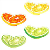Slices of citrus fruits: Orange, red grapefruit, lemon and lime — Stock Vector