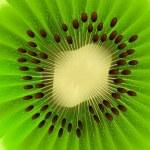 Vector Kiwi Fruit — Stock Vector