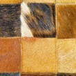 Stock Photo: Cow hide detail