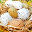 Royalty-Free Stock Photo: Eggs nest