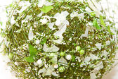 Green decor — Stock Photo