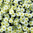 White floral pattern — Foto de Stock