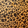 Stock Photo: Jaguar hide