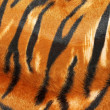 Tiger hide - Foto Stock
