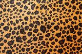 Jaguar hide — Stock Photo