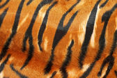 Tiger hide — Foto de Stock