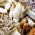 Wild mushrooms — Stock Photo