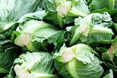 Cabbage — Stock fotografie