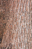 Background of tree cortex rough surface texture — Stock Photo