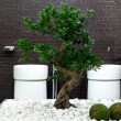 Bonsai bath - Stock Photo