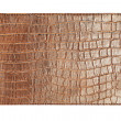 Crocodile skin - Stock Photo