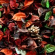 Stock Photo: Potpourri