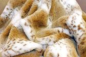 Fashion fur — Stock Photo