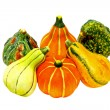 Gourds isolated — Stock Photo