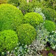 Stock Photo: Green bushes