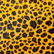 Stock Photo: Leopard texture