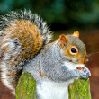 Squirrel eat — Stock Photo