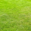 Stock Photo: Grass vertical