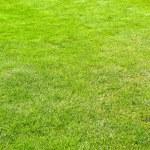 Grass vertical — Stock Photo